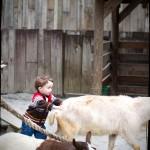 Max the goat wrangler